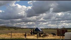 Alsike Prstgrd: An Organic Farm