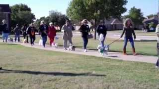 Westie Walk 2012