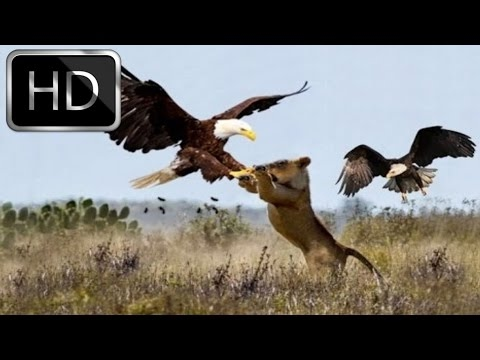National Geographic Documentary - Bald Eagle  - Full Documentary 2016