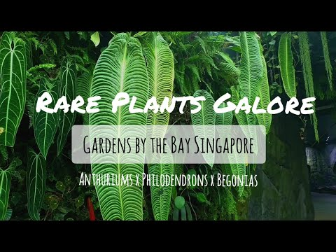 RARE PLANTS GALORE - Tour of Gardens by the Bay Singapore (Massive Anthuriums and Philodendrons!)