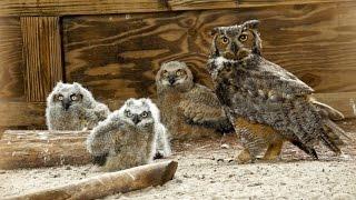 ONE Central Florida Short: Owl Super Mom