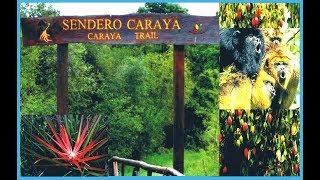 Sendero Carayà- Iberà-Corrientes-Argentina-Producciones Vicari.(Juan Franco Lazzarini)