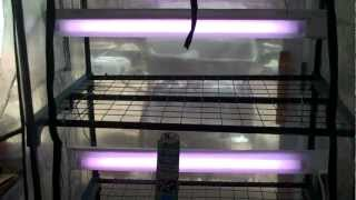 4 Tier Mini Greenhouse with Grow Lights