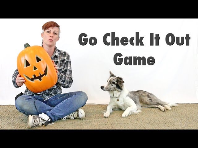 Go Check It Out Game - Dog Training