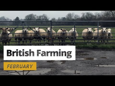 British Farming - 12 Months On A UK Farm: February