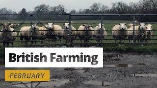 British Farming - 12 Months On A UK Farm: February