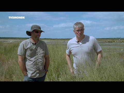 Intégrale Épicerie fine : Sel et plantes des marais du pays de Guérande