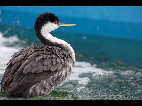 Pooling Resources for Aquatic Birds