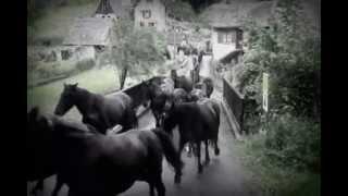 Transhumance chevaux en Bethmale 2 et 3.juin 2012 en Ariège-Pyrénées.