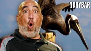 Fighting A Pelican Is Bad Karma. Sean Peabody