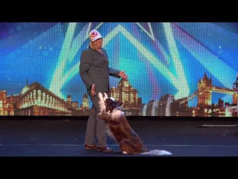 Собака Невероятно проявила себя на сцене Шоу талантов