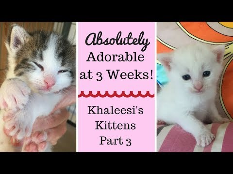 Baby Kittens at 3 weeks - Starting to Explore & More! Part 3