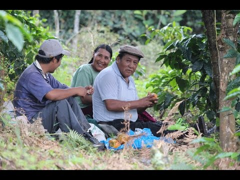 Crop and Preparation of Tunki Coffee Organic - Farm of Nicolas Viamonte Quispe