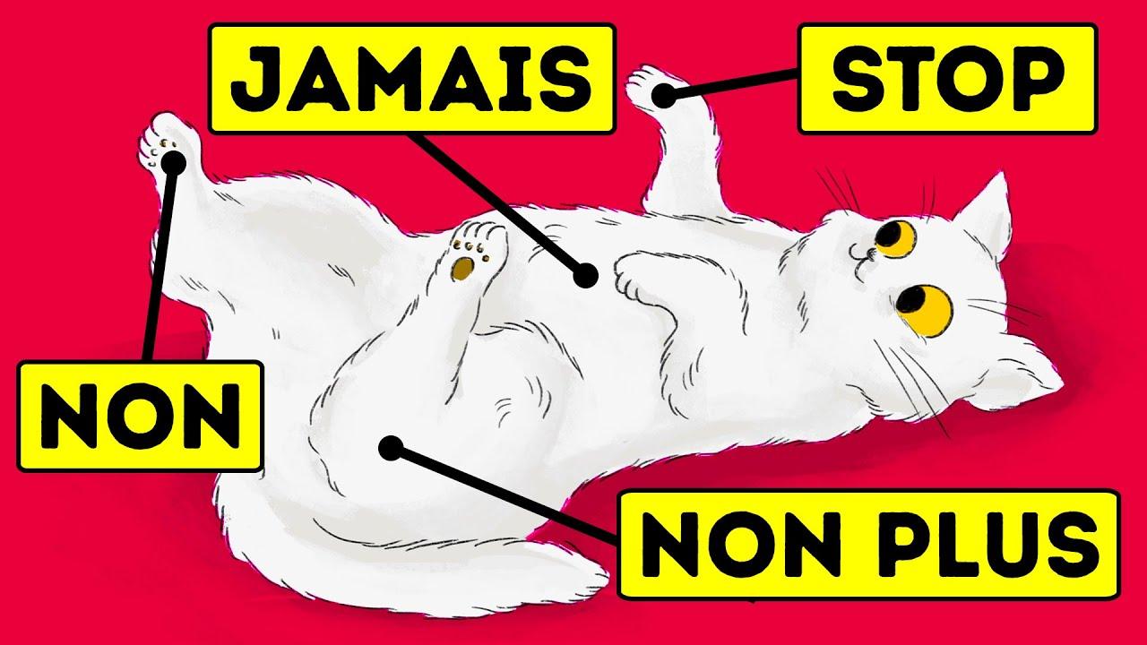 15 Choses Que Les Chats Détestent Mais Qu'ils ne Peuvent Pas te Dire