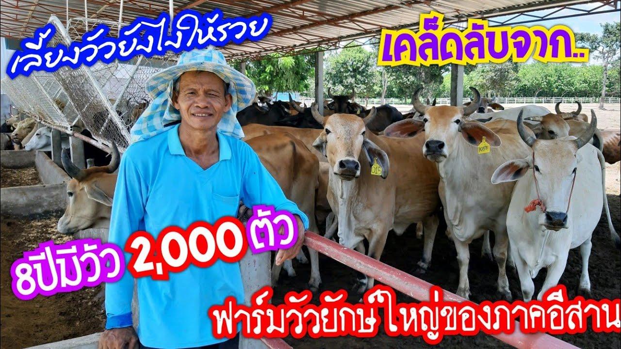 เริ่มต้นจากเงินหลักพันปัจจุบันเป็นหลักสิบล้าน!!วัวสร้างชีวิต
