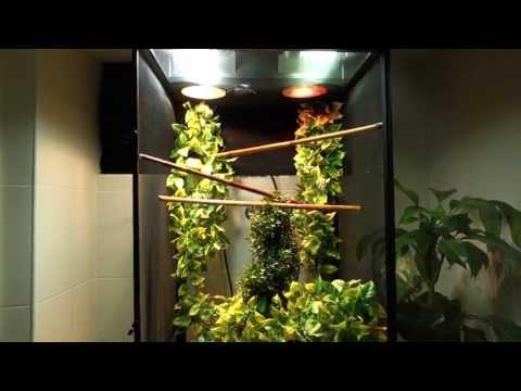 Panther Chameleon Setup (Exoterra RS400, Zoo Med ReptiBreeze, Zilla Mini Halogen)