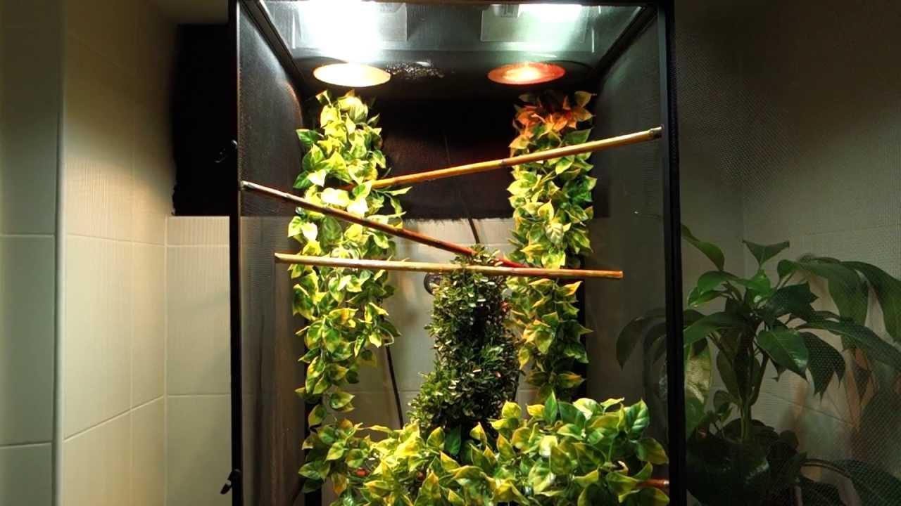 Panther Chameleon Setup (Exoterra RS400, Zoo Med ...