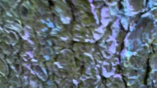 видео Виртуальная экскурсия: дом-музей корнея чуковского в переделкино. часть i