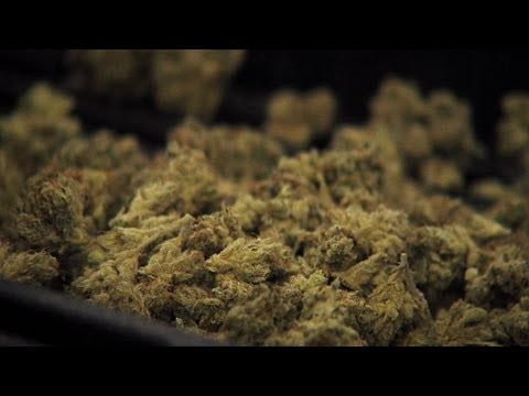 The Garden State Goes Green With Medicinal Marijuana