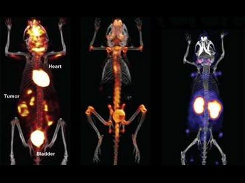 Applications of PET Imaging in Preclinical Research