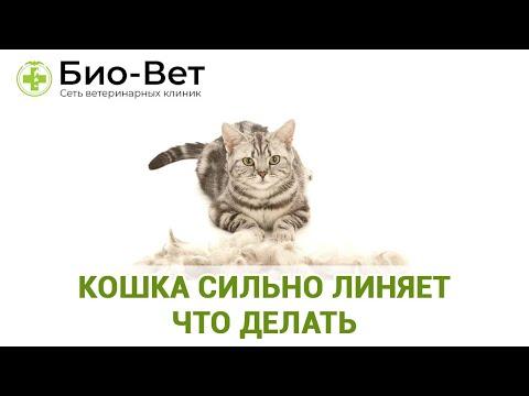 Вопрос: Как уменьшить объем линьки у кошек?