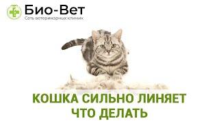Кошка Сильно Линяет  Что Делать & Линька Кошки Круглый Год. Ветклиника Био-Вет