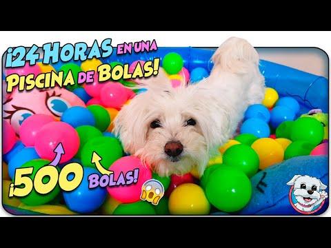 Mi PERRO pasa 24 HORAS en una PISCINA de BOLAS! 🐶Anima Dogs