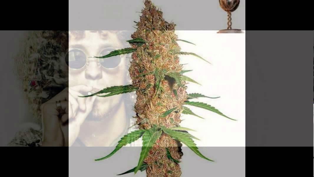 Покупать конопли семя ли можно марихуаны москве семена по
