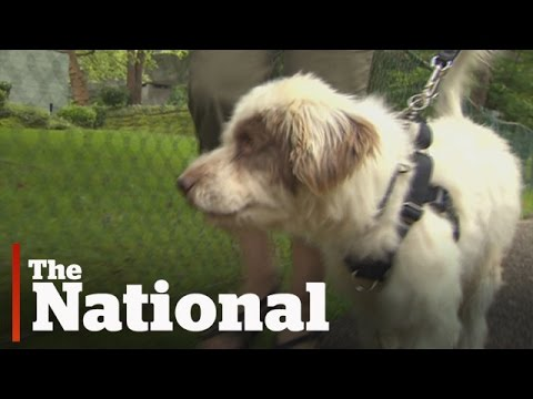 Dogs rescued from Thailand settled in Canada