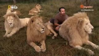 Aslanların Dostu   Krallıkta Ölüm