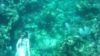 Abaco - Sandy Cay Reef - Snorkeling 19