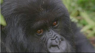 TPGtv Episode 5: Traveling to Rwanda and Trekking with Gorillas