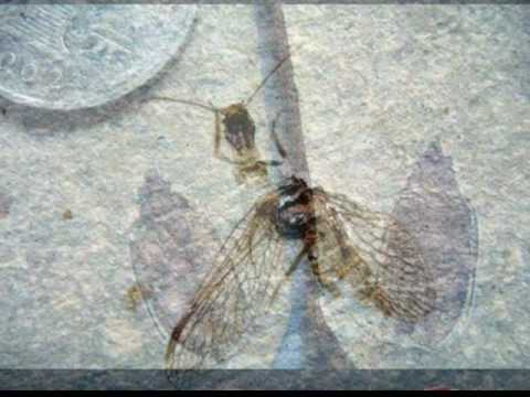 Fabulous Chinese Lower Cretaceous Insect Fossils