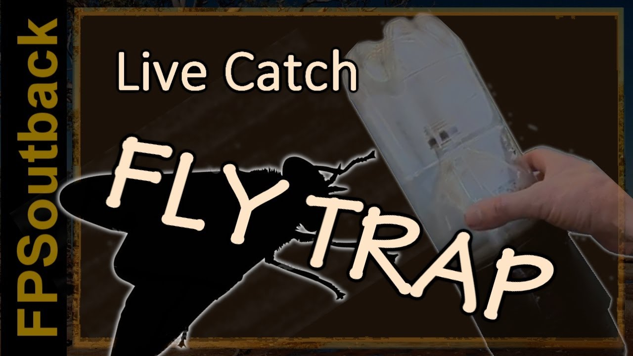 How to Make a Live Catch Fly Trap