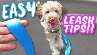 STOP Leash Pulling & Barking!  5 products that made leash training TOO EASY!!