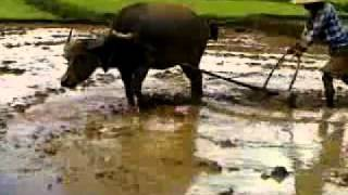 farmer life in myanmar, working for US$2 per day.mp4