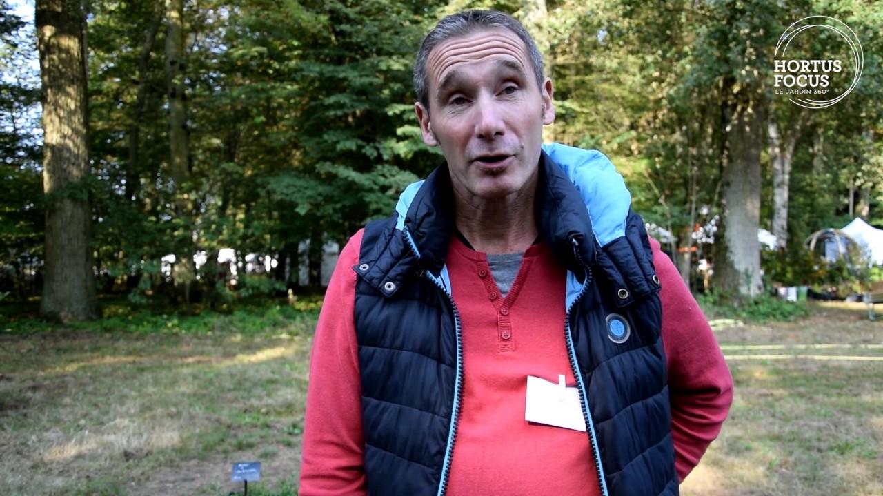 Culture Et Entretien De La Rhubarbe conseil d'experts : comment cultiver la rhubarbe rouge
