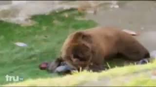медведь разрывает человека