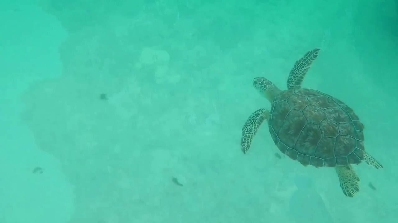 Navarre Beach Snorkeling