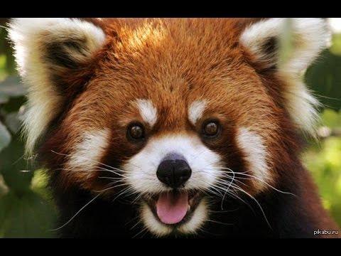 20 самых милых животных в миреПутеводный