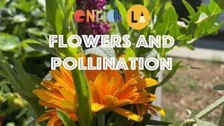 Lesson 6. Flowers and Pollination