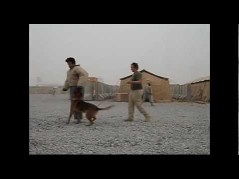 AMK9 Afghanistan Bomb / Patrol K9 Bite Work