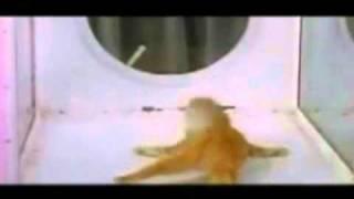 Cat Listening To Rebecca Black (LSD CAT REMIX) Thumbnail