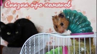 Сказка про хомяков от канала ХОМКИ. Хит 2018!  a fairy tale about hamsters