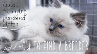 How to find a breeder |     Guide to buying purebred kitten | Ragdolls Pixie and Bluebell