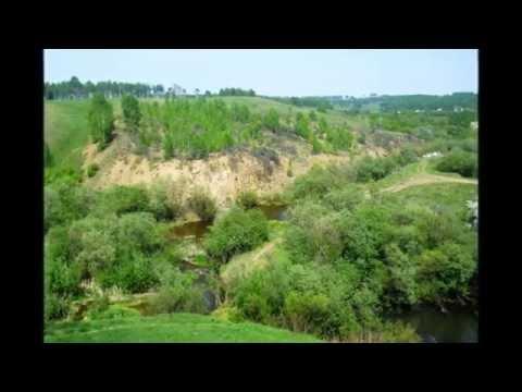 Эфедра, или Кузьмичева трава