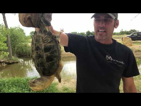 How To Catch, Clean And Cook A Snapping Turtle!  PT 1
