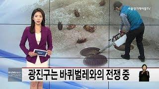 광진구는 바퀴벌레와의 전쟁 중(서울경기케이블TV뉴스)