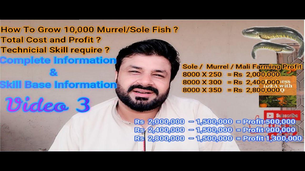 Sole(Murrel) Fish Farming Cost Estimation Complete information How to Start Murrel Farming  Video 3
