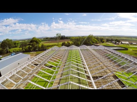 Australian vegetable farmers speak about Economy of Scale